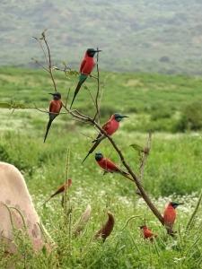 Vogelreis Ethiopië