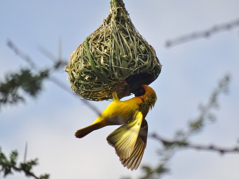 Vogelreizen Ethiopië