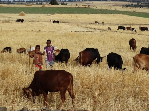 Ethiopië kinderen