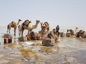 Camels Lake Assale
