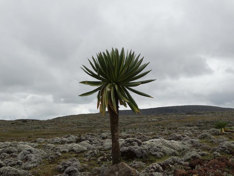 Sanetti Plateau ethiopie