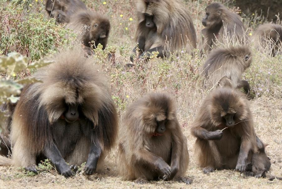 natuurreis Ethiopie