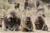 Groepsreis Ethiopie noord