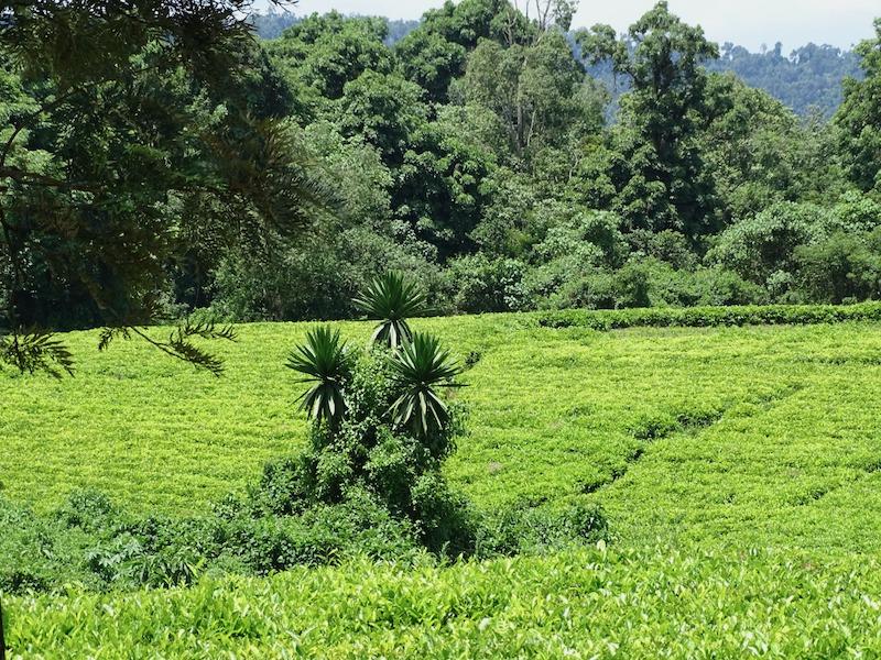 Koffie reis Ethiopië